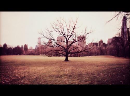 arbre central park