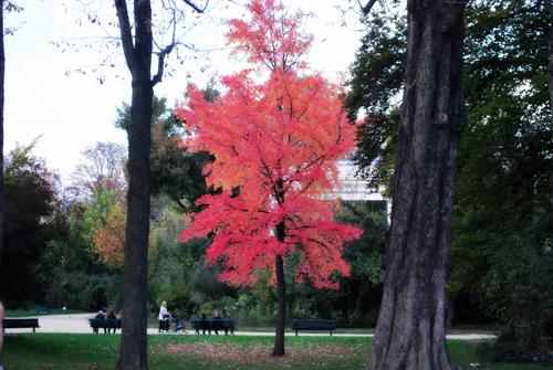 arbre paris2