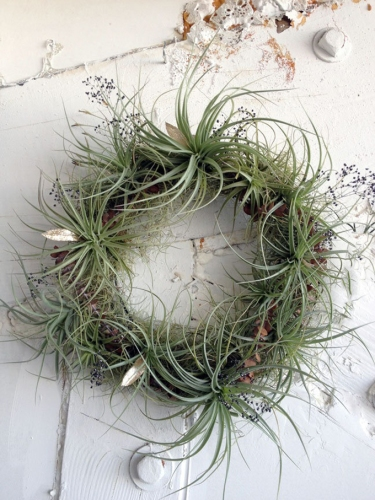 air-plant-living-wreath